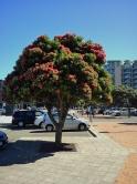 2011-12-21 Wgtn waterfront (7)