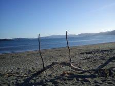 2012-03-17 Petone foreshore (4)