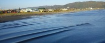 cropped-2012-03-17-petone-foreshore-38.jpg