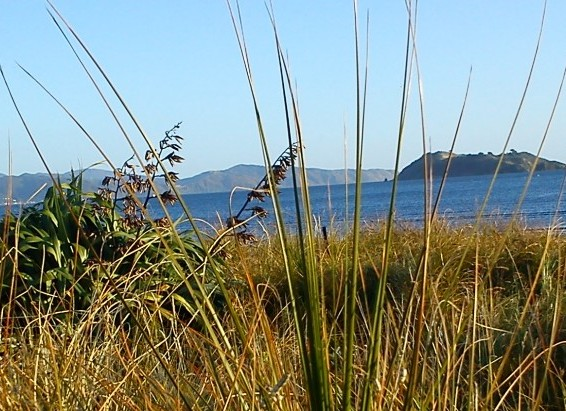 cropped-2012-03-17-petone-foreshore-42.jpg