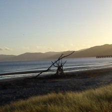 cropped-2012-03-17-petone-foreshore-50.jpg