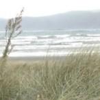 cropped-cropped-cropped-2013-05-10-paraparaumu-beach-8.jpg