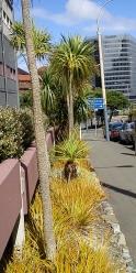 2012-03-18 Wellington (42)