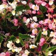 2014-02-11 Wgtn Botanic Gardens