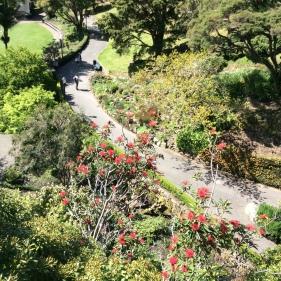 2016-10-16 Wellington Botanic Gardens (54)