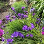 2016-10-24 Wellington Botanic Gardens (44)