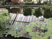 2016-10-24 Wellington Botanic Gardens (57)