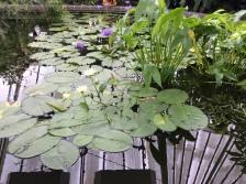 2017-01-28 Wellington Botanic Gardens (19)