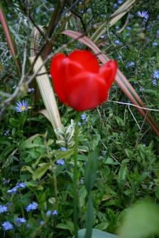 Masterton home garden