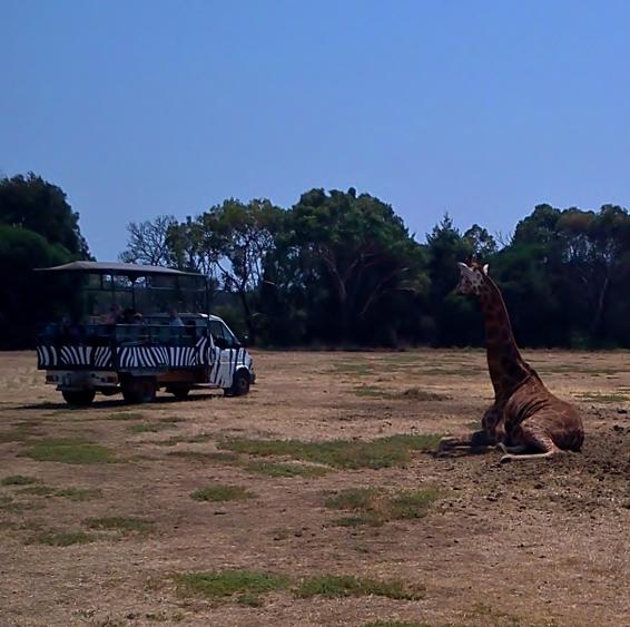 2013-01-21 Werribee Zoo (17)